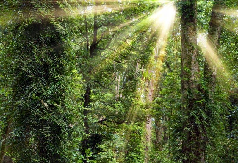 森林雨阳光结构树 免版税库存照片