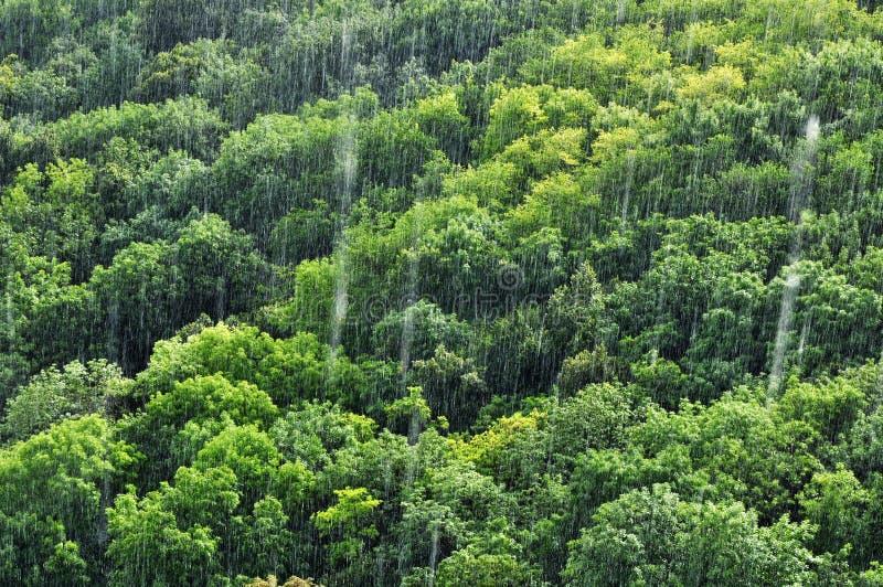 森林雨降雨量 免版税库存照片