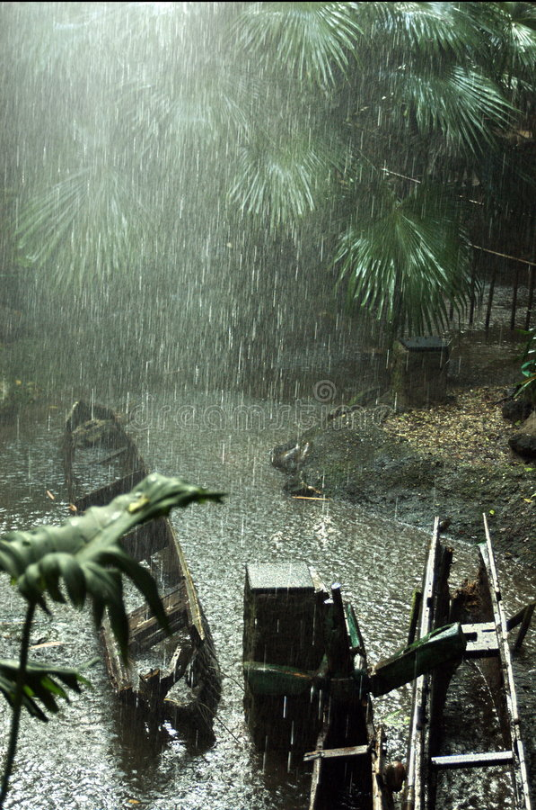 森林雨 库存照片