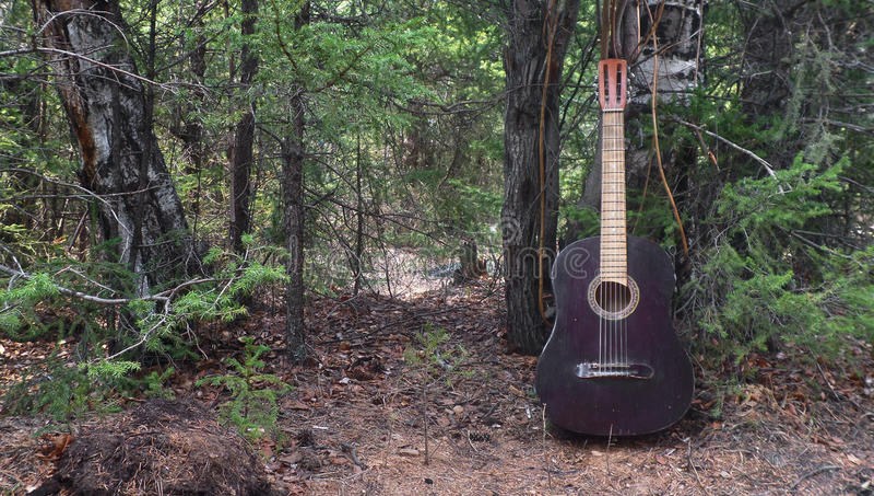森林音乐 库存图片
