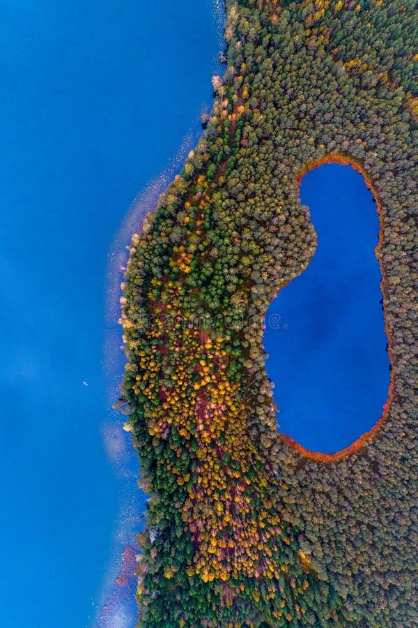 森林顶视图的湖 库存照片