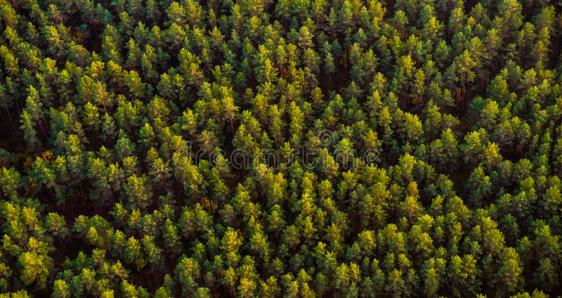 森林顶视图 免版税库存照片