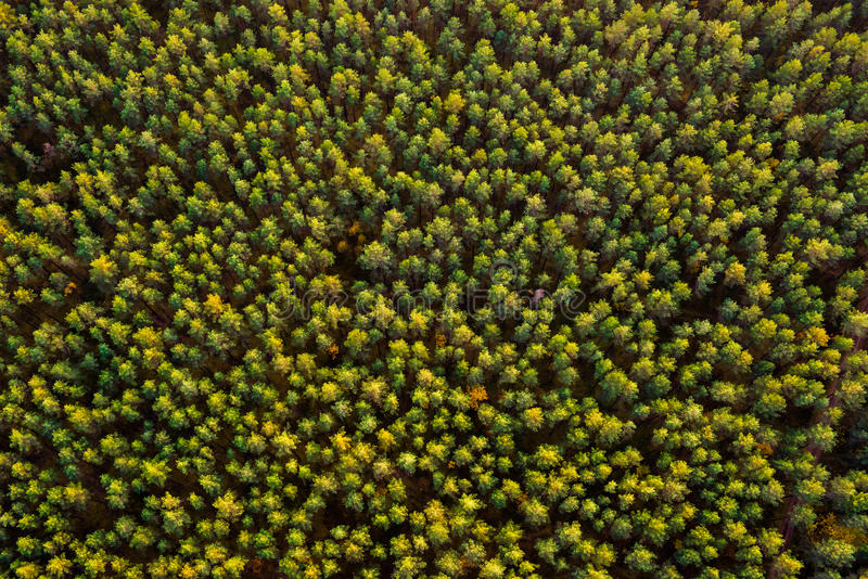 森林顶视图 库存图片