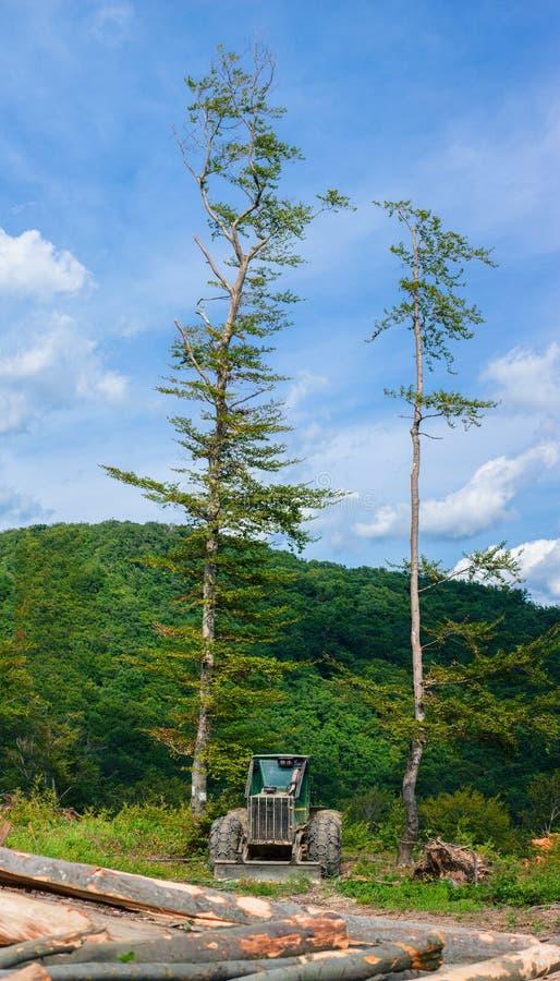 森林风景、青山、蓝天、树和集材工拖拉机有一些砍的树的 免版税库存图片