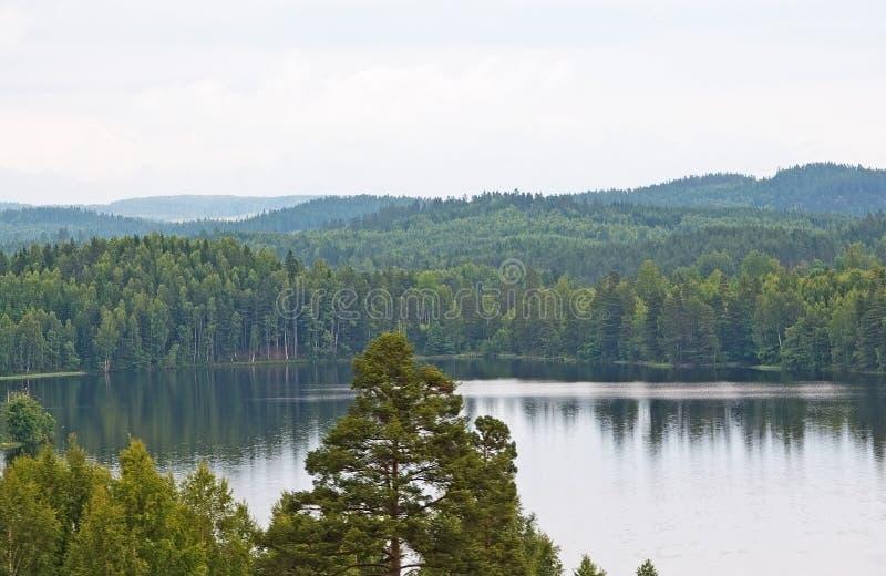 森林风景和平静的湖在一个灰色夏天下午 免版税库存照片