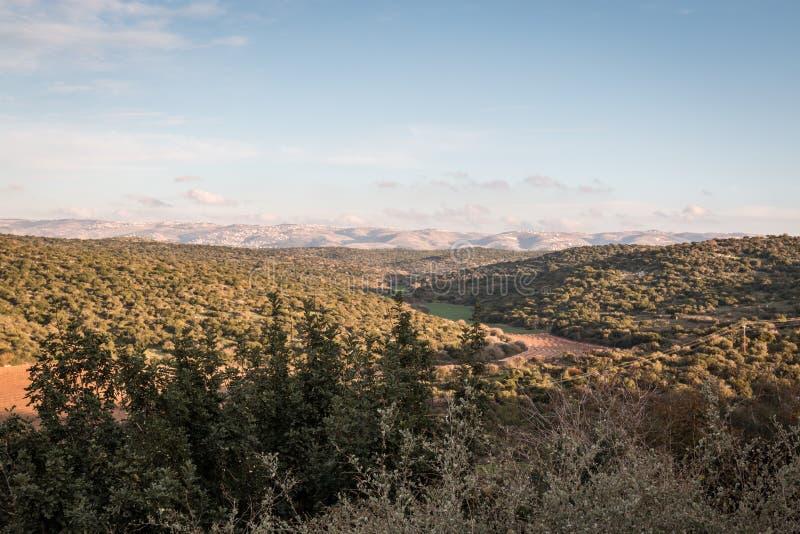 森林风景在有云彩、树、山和蓝天的以色列 免版税图库摄影