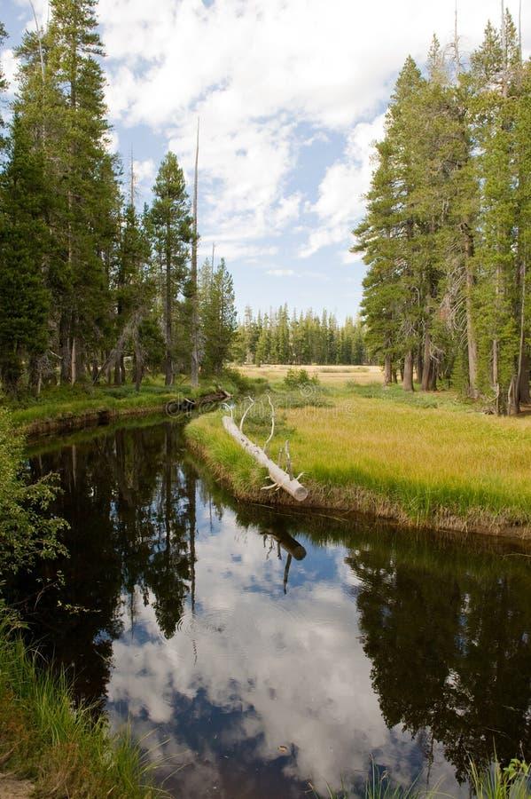 森林风景支流 免版税库存照片