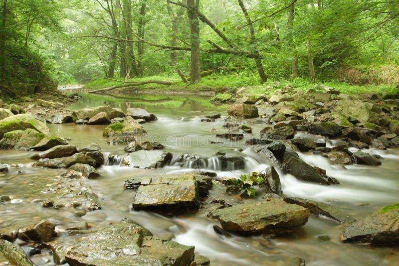 森林风景流 库存图片