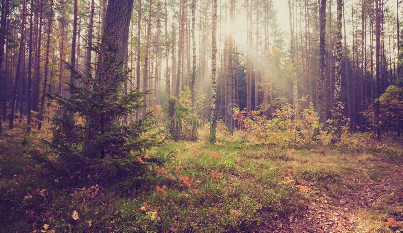 森林风景葡萄酒照片  库存图片