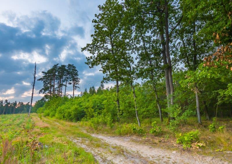 森林风景被拍摄夏天晚上 免版税库存图片