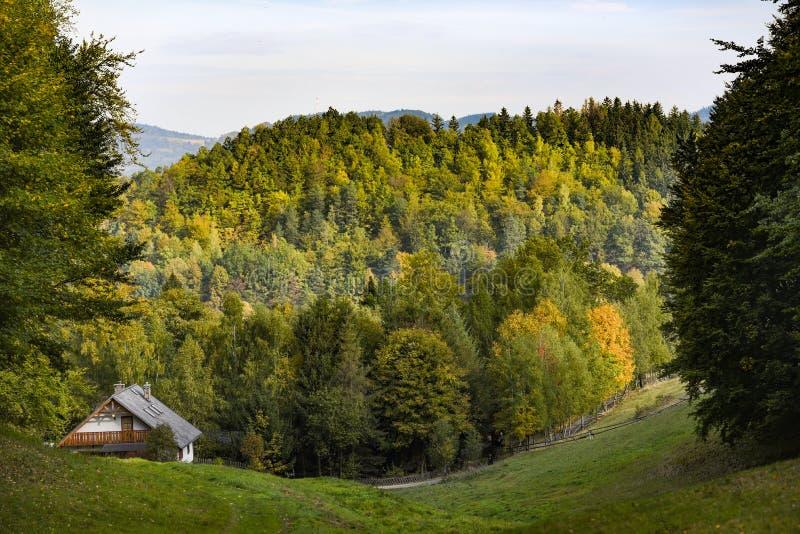 森林风景,用秋天颜色盖的树在波兰 免版税库存照片