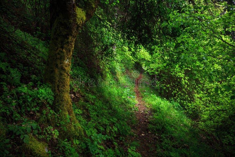 森林风景,西西里岛,意大利 免版税库存图片