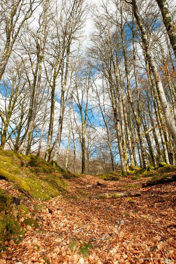 森林风景 库存图片