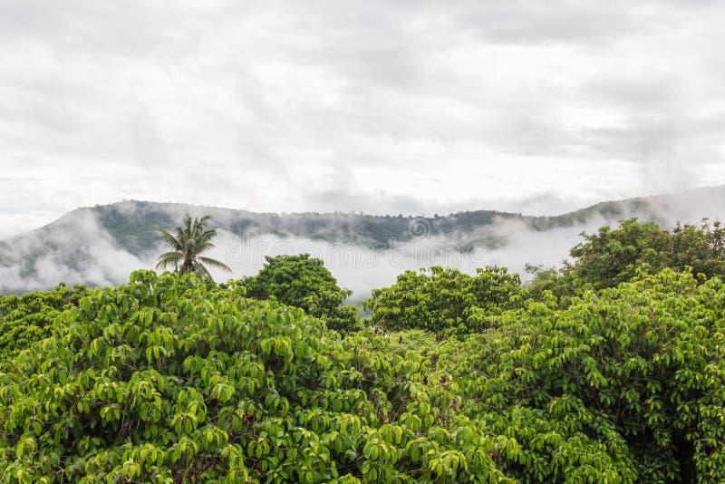 森林高树顶视图有雾和山背景 库存图片