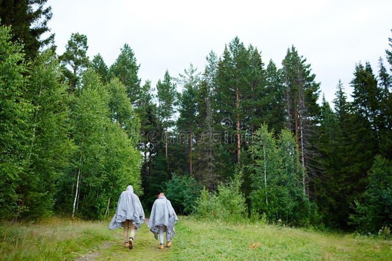 森林高涨 图库摄影