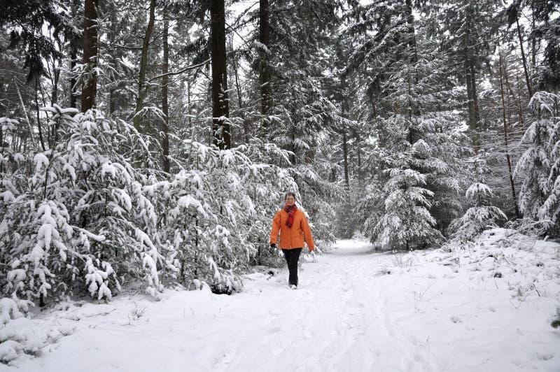 森林高级多雪的走的妇女 图库摄影