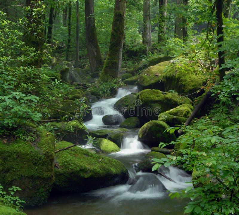 森林魔术流 图库摄影