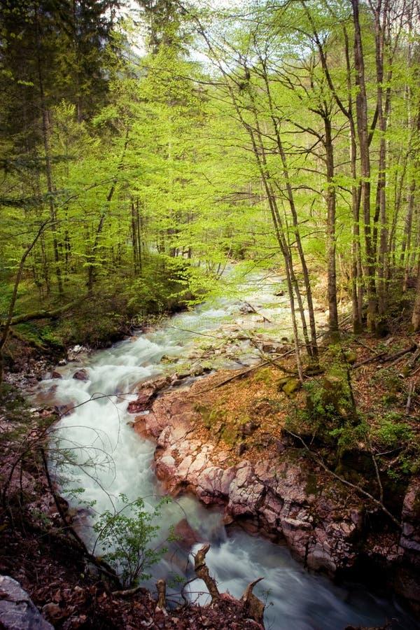 森林魔术 免版税库存图片