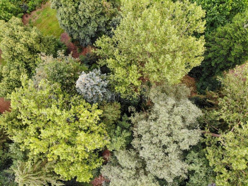 森林鸟瞰图在秋天季节&颜色期间的 免版税图库摄影