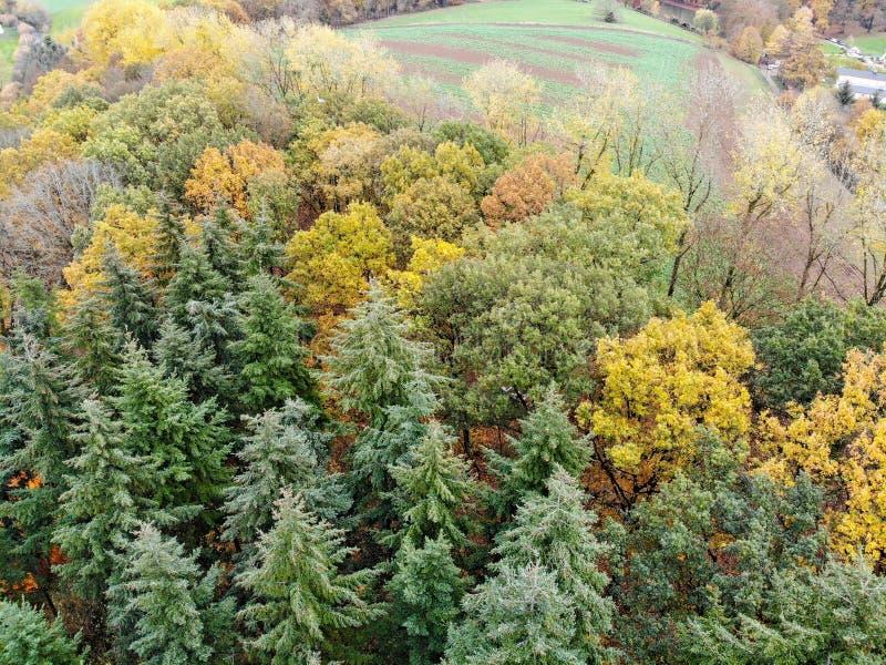 森林鸟瞰图在秋天季节&颜色期间的 免版税库存照片