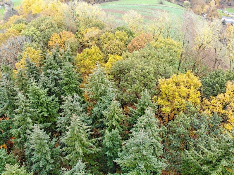 森林鸟瞰图在秋天季节&颜色期间的 图库摄影