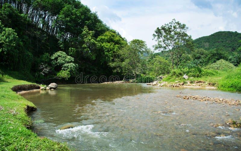 森林,与晴朗的蓝天的河风景 免版税库存图片