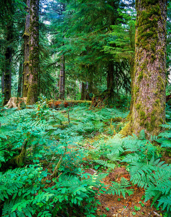 森林,俄勒冈 库存照片