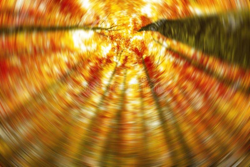 森林,在秋天木头的大山毛榉树 免版税库存图片