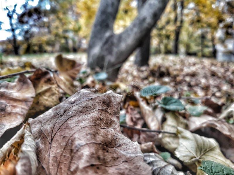 森林, Deta 免版税库存图片