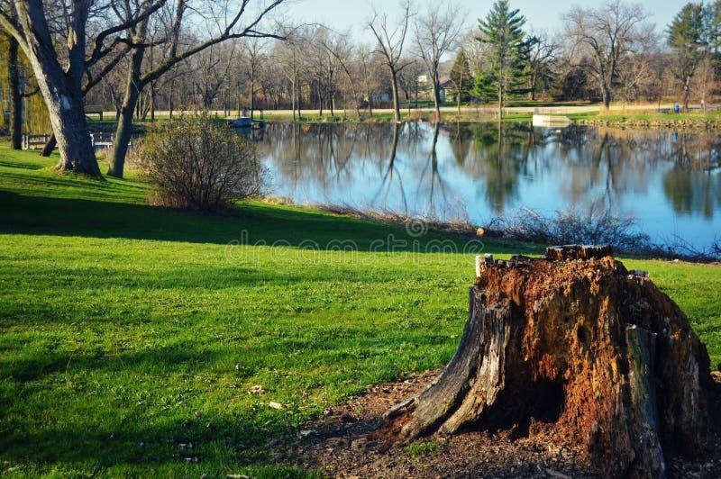 森林绿叶采蘑菇树桩结构树 库存图片
