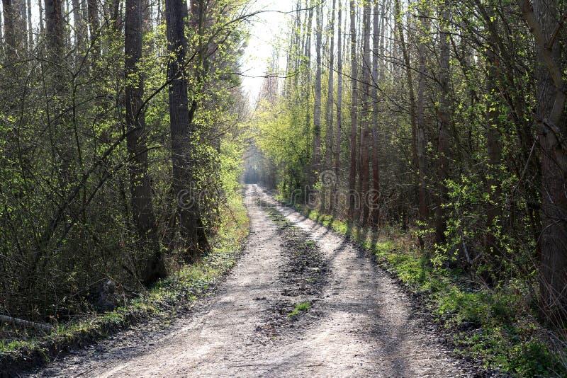 森林-早期的春天 免版税库存照片