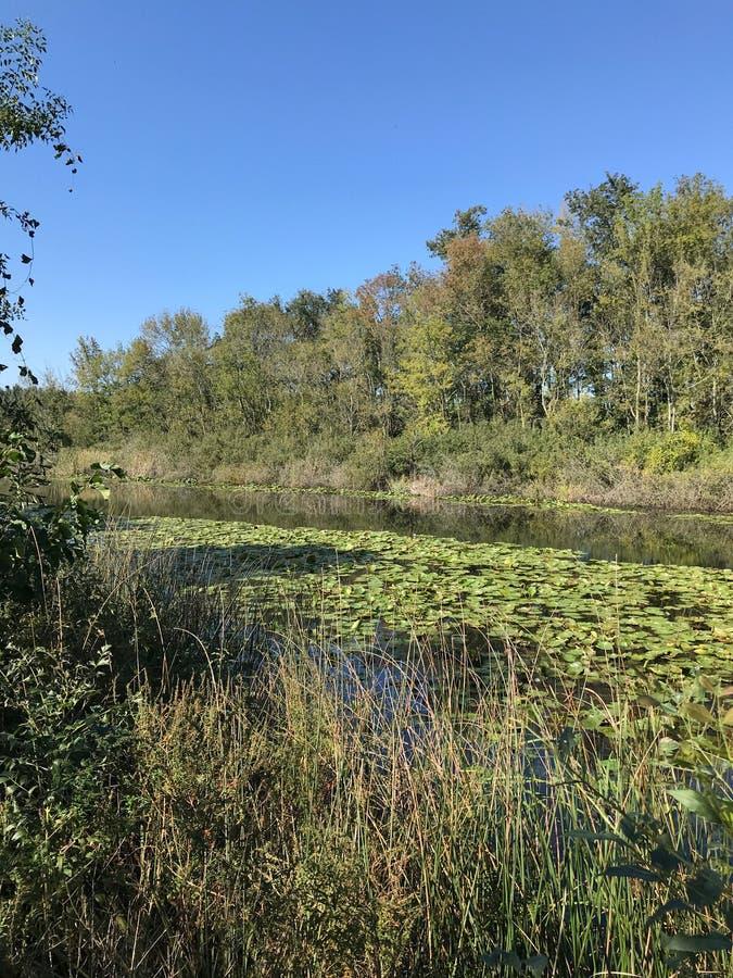 森林10月2018年,土耳其的其次最大的淡水沼泽:阿贾拉尔在萨卡里亚,土耳其 库存照片