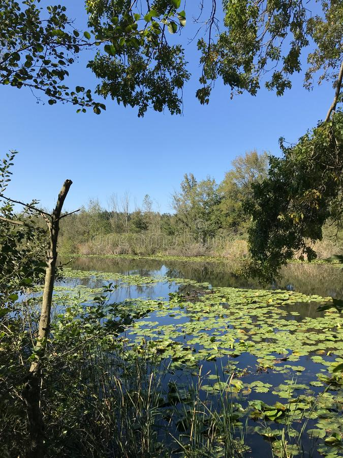 森林10月2018年,土耳其的其次最大的淡水沼泽:阿贾拉尔在萨卡里亚,土耳其 免版税库存图片
