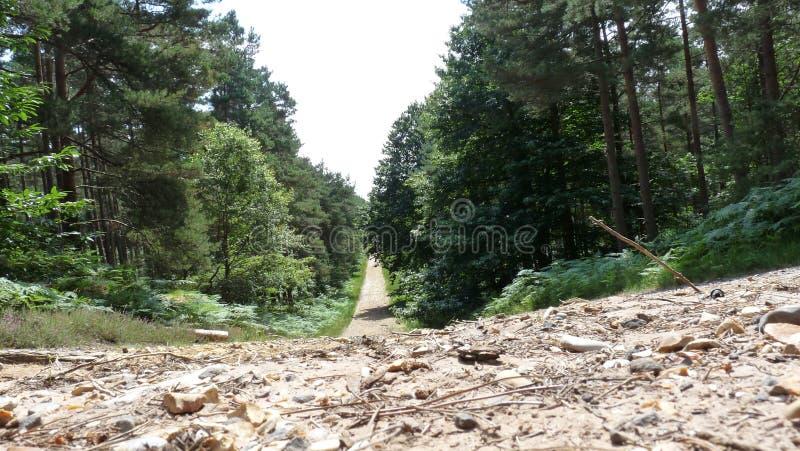 森林结构 图库摄影