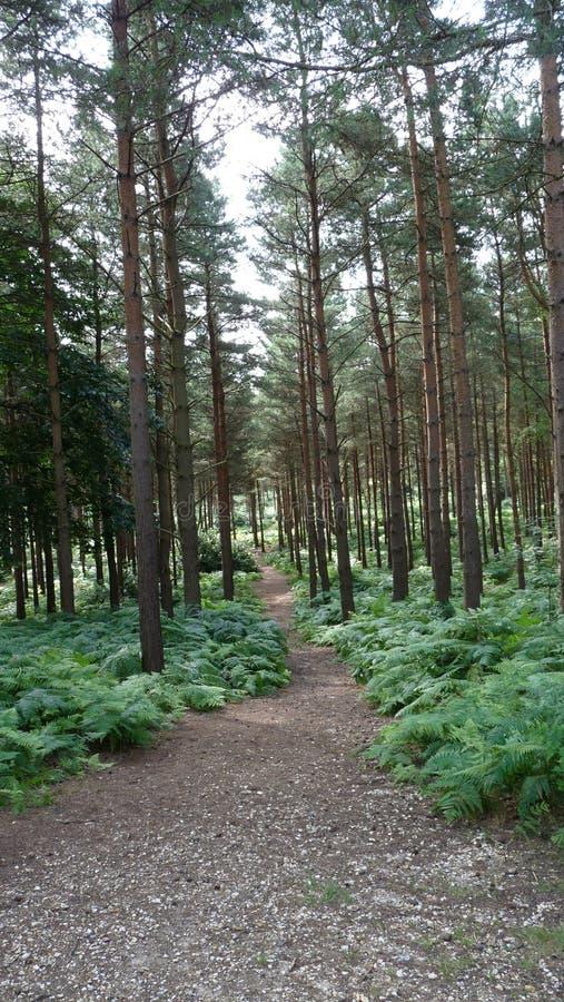 森林结构 库存图片