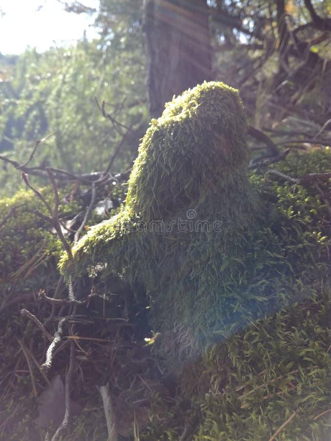 森林细节在中午阳光下 库存照片