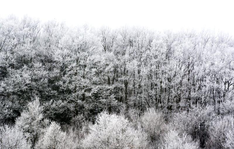 冻森林细节  免版税库存图片
