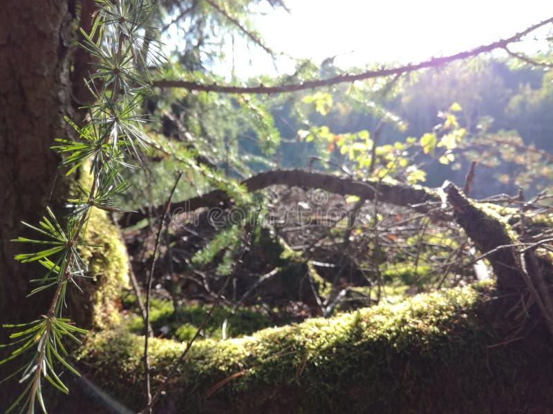 森林细节 库存图片