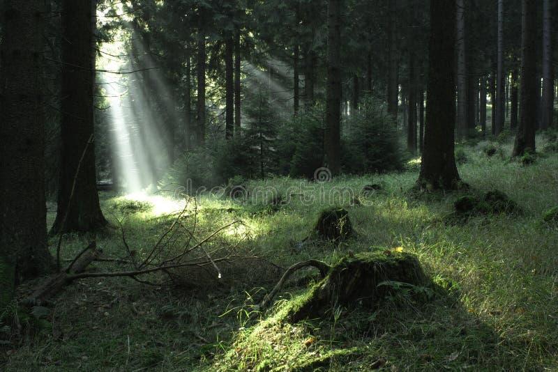 森林\ 1 库存照片