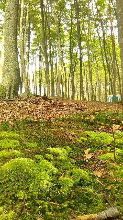 2森林 免版税图库摄影