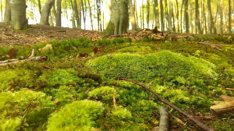 3森林 库存照片