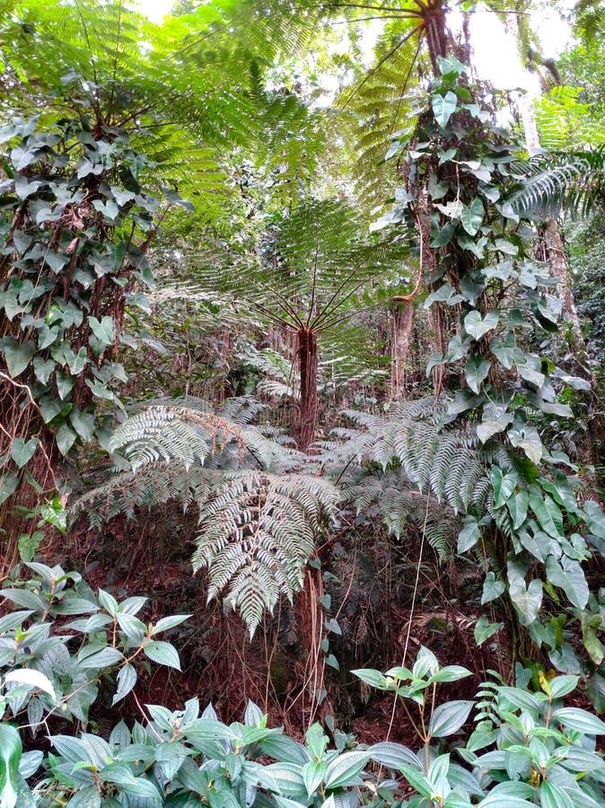 森林001 免版税库存照片