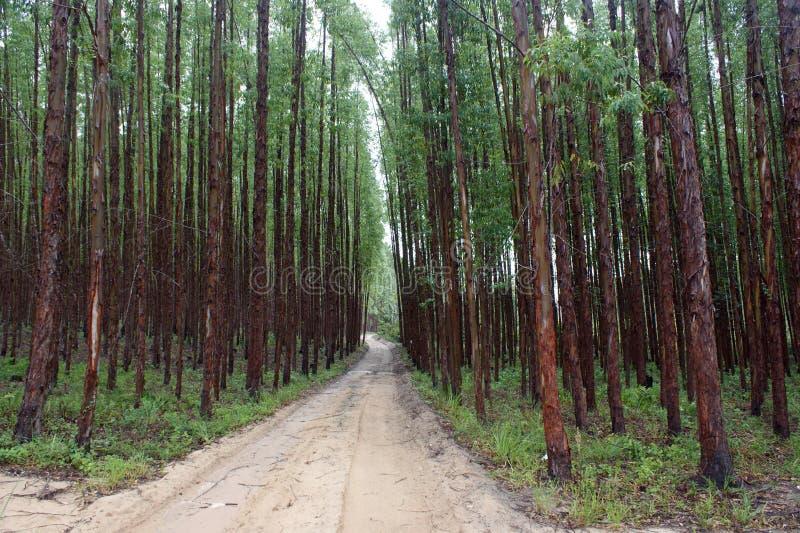 森林 图库摄影