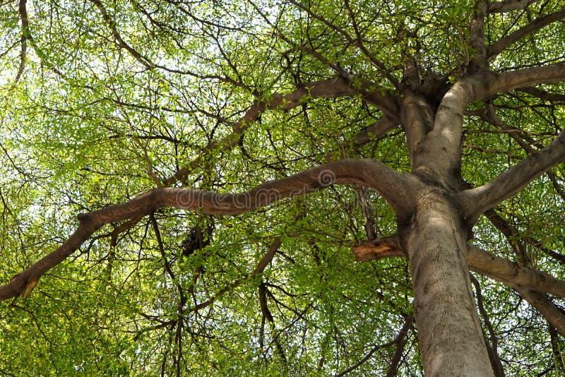 森林001 免版税图库摄影