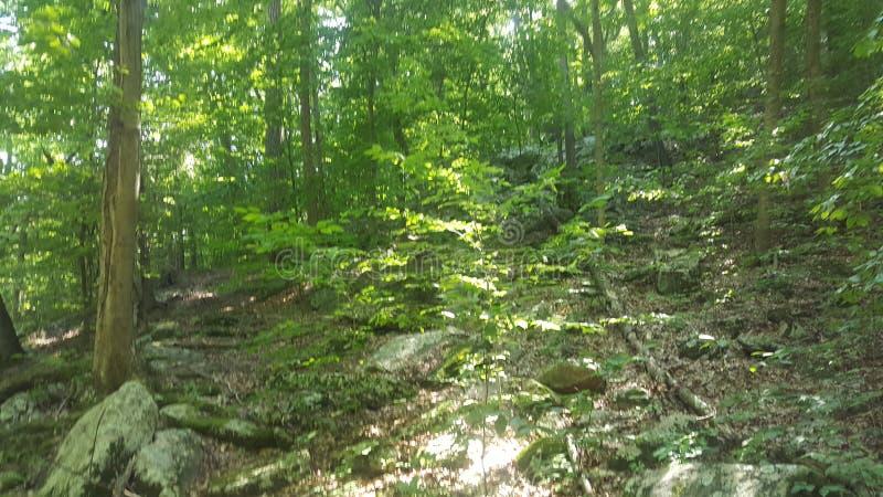 森林30 库存图片