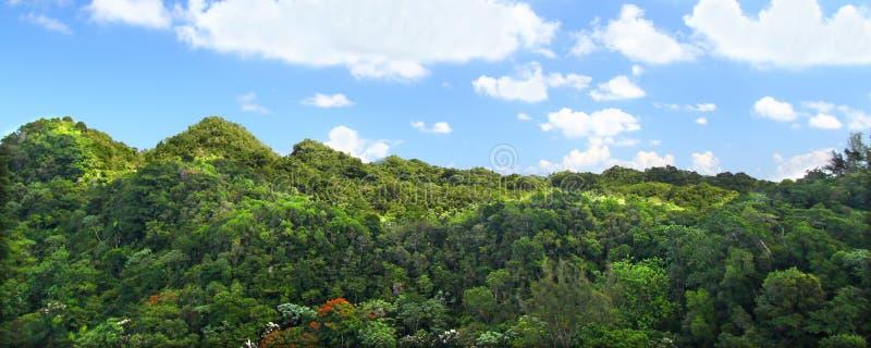 森林guajataca puerto预留rico 免版税库存照片