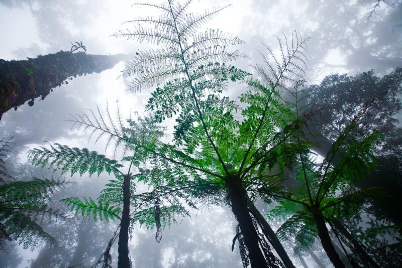 森林kinabalu有薄雾的挂接山 免版税库存图片
