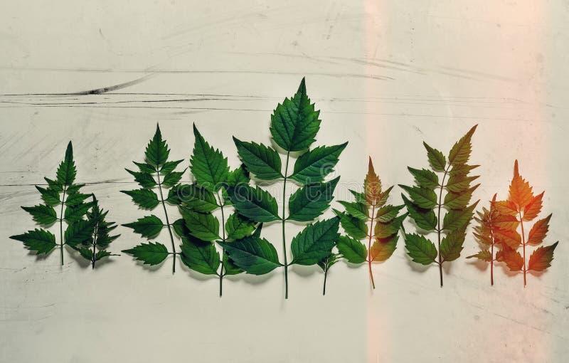 森林treeline由绿色制成在明亮的背景离开 minim 库存图片