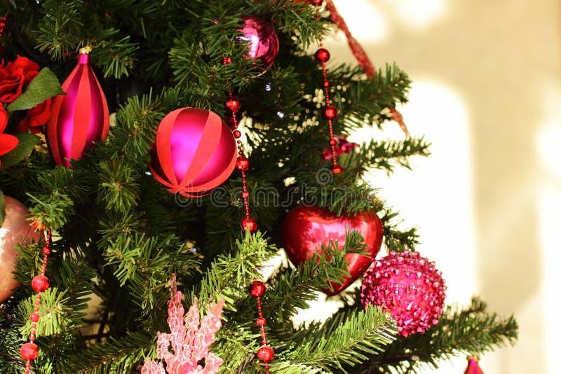 1棵圣诞树 免版税库存图片