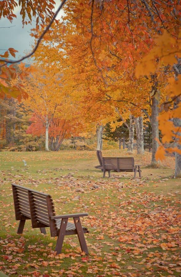 椅子和黄色在庭院秋天季节离开 免版税库存照片